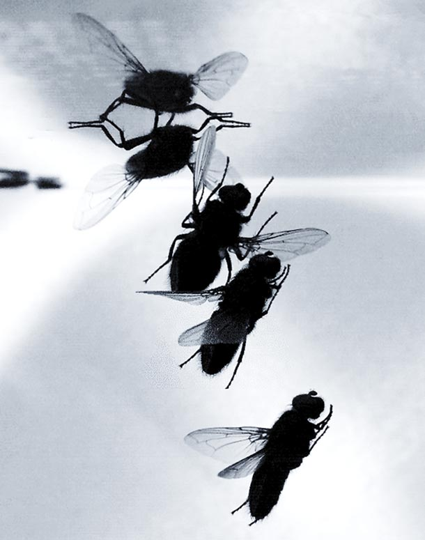 multiple images of a fly landing on a ceiling