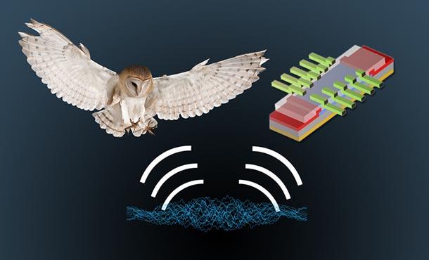 upper left owl in flight, upper right split-gate transistors, bottom sound waves